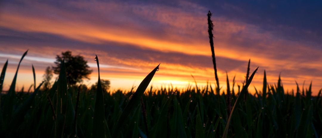 feedback, landschaft, gras, morgentau, sonnenaufgang